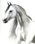 Head Shot Drawings - Arabian Mare by Cheryl Poland