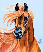 Horse Drawings Prints - Arabian portrait in Color Pencil Print by Cheryl Poland