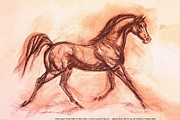 The Horse Pastels Posters - Arabian Stallion Marranas Poster by Maureen Love