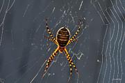 Arachnophobia Print by Karen Slagle