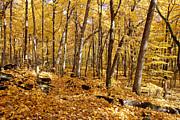 Arboretum Trail Print by Steven Ralser