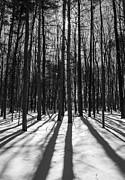 Steven Ralser - arboretum trees
