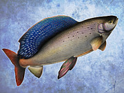 Arctic Drawings Posters - Arctic Grayling Poster by Nick Laferriere