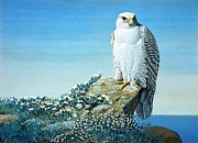REPRODUCTION - Arctic Gyr Falcon