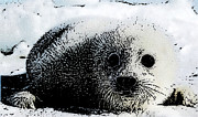 Arctic Drawings Prints - Arctic Treasure Print by Shere Crossman