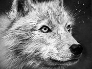 Arctic Drawings Metal Prints - Arctic Wolf Metal Print by Sharlena Wood