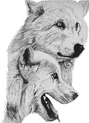 Arctic Drawings Posters - Arctic Wolves Drawing Poster by Catherine Roberts