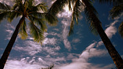 Tropical Islands Photos - Are there Palm Trees in Heaven  color by Cheryl Young