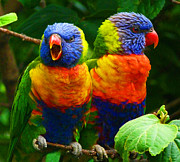 Margaret Saheed Posters - Are You Listening - Rainbow Lorikeets Poster by Margaret Saheed