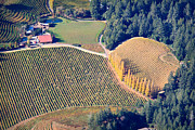 Sonoma County Vineyards. Prints - Arial Cypress and Vineyards Print by Kathy Sidjakov
