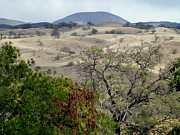 Barren Land Prints - Arid Hills of Kohala Print by Lori Seaman