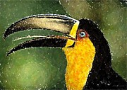 Ariel Pastels Framed Prints - Ariel Toucan Bird   Framed Print by Olde Time  Mercantile