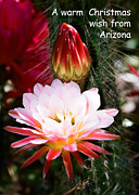 Christmas Card Pyrography - Arizona Christmas Card - Cactus flower and bud by Kathy McClure