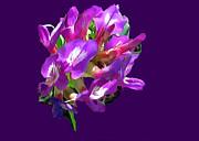 Bob Johnston - Arizona Desert Flowers