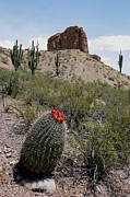 Landscape Photos - Arizona Icons by Joe Kozlowski