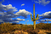 Canadian Photographers Framed Prints - Arizona Landscape 2 Framed Print by Bob Christopher