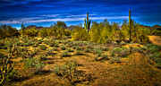 Shrubbery Framed Prints - Arizona Landscape IV Framed Print by David Patterson