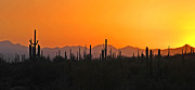 Howard Koby Posters - Arizona Saguaro Cactus Sunset Poster by Howard Koby