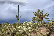Stormy Weather Posters - Arizona Sonora Desert Landscape 1 Poster by Bob Christopher