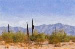 Arizona Sonoran Desert Print by Betty LaRue