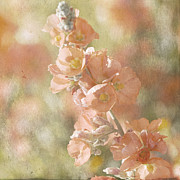 Sphaeralcea Prints - Arizona Wildflowers Copper Globemallow Print by Renee Hong
