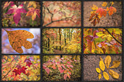 Arkansas Photo Posters - Arkansas Autumn Poster by Bonnie Barry