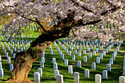 National Cemetery Prints - Arlington National Cemetary Print by Brian Jannsen