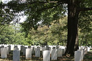 Headstones Posters - Arlington National Cemetery - 121244 Poster by DC Photographer
