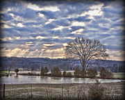 Franklin Tennessee Prints - Arno Road Tree Print by Pic