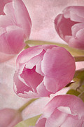 Aroma D'amor Print by A New Focus Photography
