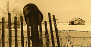 Andrew Wyeth Photos - Art homage Andrew Wyeth bucket fence  near Aberdeen South Dakota 1965-2008 by David Lee Guss