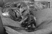 Moggy Posters - Art of Relaxation according to Diesel Poster by Angela McClinton