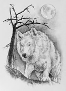 Arctic Drawings Prints - Artic wolf Print by Bernadett Kovacs