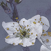 Linda  Smith - Artistic Plum Blossom