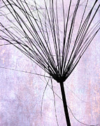 Weedy Posters - Artsy Broom in Purple Poster by Sabrina L Ryan