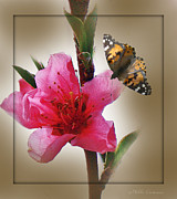 Mikki Cucuzzo Acrylic Prints - Artsy Flower and Butterly Acrylic Print by Mikki Cucuzzo