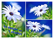 Photography As Art Framed Prints - As Bright as a Daisy - Collage Framed Print by Kaye Menner
