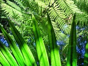El Yunque Metal Prints - As green as it gets Metal Print by Olivier Calas