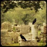 Common Crows Prints - As Summer Fades Print by Gothicolors And Crows