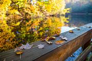 Karol  Livote - As The Leaves Fall