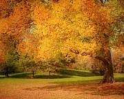 Kim Hojnacki - As The Leaves Fall