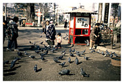 Feeding Birds Art - Asakusa Street Scene 2 by The  Vault - Jennifer Rondinelli Reilly