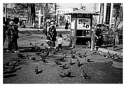Feeding Birds Photos - Asakusa Street Scene by The  Vault - Jennifer Rondinelli Reilly