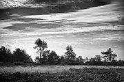 Nature Study Digital Art Prints - Ashdown Forest in Black and White Print by Natalie Kinnear