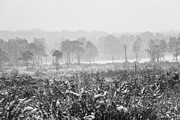Winter Prints Digital Art Posters - Ashdown Forest in the Snow Poster by Natalie Kinnear