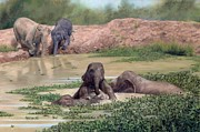 Rachel Stribbling - Asian Elephants - In...