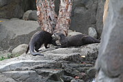 Small Framed Prints - Asian Small Clawed Otter - National Zoo - 01131 Framed Print by DC Photographer