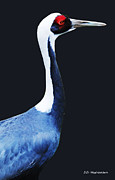 DiDi Higginbotham - Asian White Naped Crane