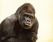 Christine Sponchia - Asking Gorilla