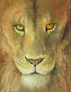 Lion Pastels Posters - Aslans Gaze Poster by James R C Martin